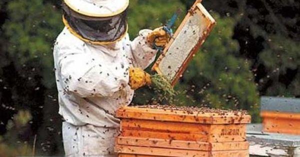 În Republica Moldova au fost create două cooperative apicole