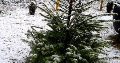 Foto /Video/ Ninge ca-n povești la Bălți 2 24.07.2021