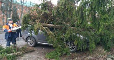Бушующий уже второй день в Москве штормовой ветер повалил 125 деревьев, один человек погиб 4