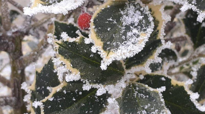 În nordul și centrul țării la sfârșit de săptămână sunt așteptate înghețuri