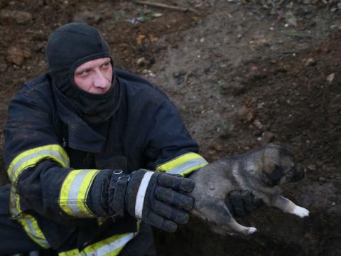 /VIDEO/ Șapte căței au fost salvați de pompieri după ce au rămas blocați sub noroi