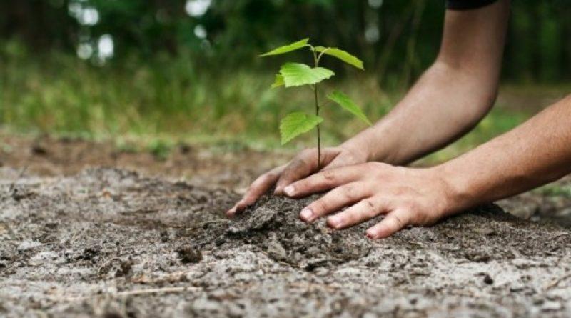 În Republica Moldova urmează a fi plantați 12 milioane de arbori