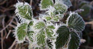 Atenție! Meteorologii anunță Cod Galben de îngheț pe întreg teritoriul țării