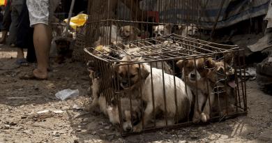 Foto Шэньчжэнь станет первым городом в Китае, где запретят есть кошек и собак 3 25.07.2021