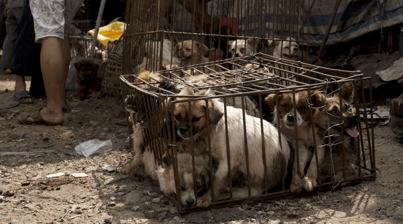 Foto Шэньчжэнь станет первым городом в Китае, где запретят есть кошек и собак 1 23.06.2021
