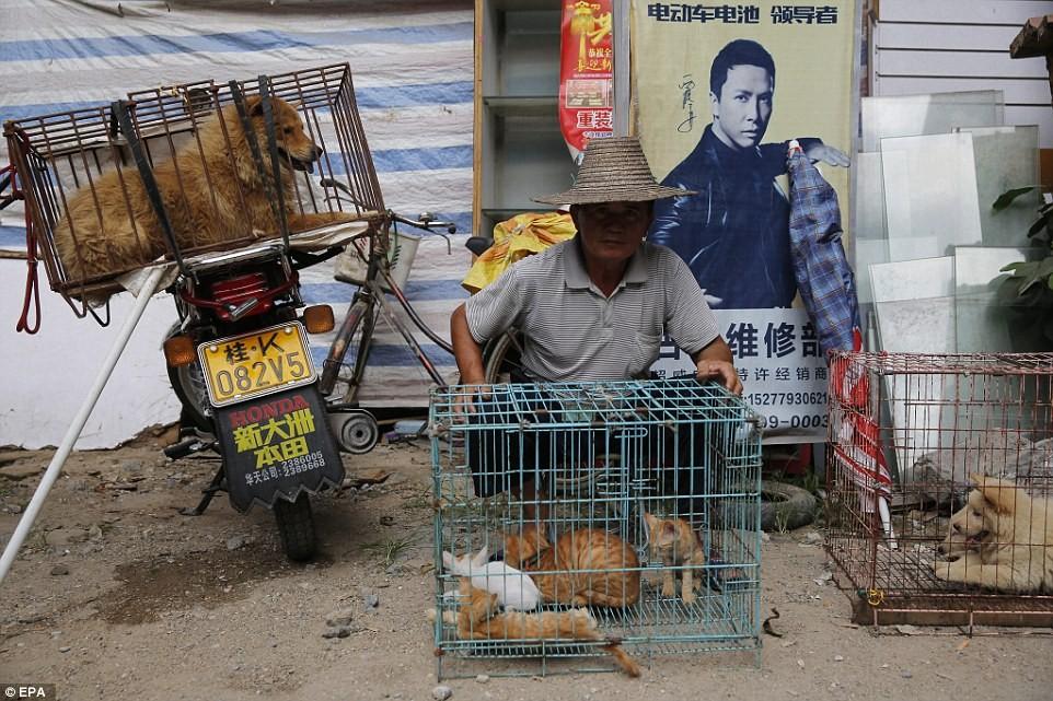 Foto Шэньчжэнь станет первым городом в Китае, где запретят есть кошек и собак 2 23.06.2021