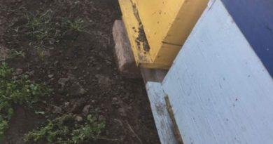 Sute de familii de albine au fost otrăvite, apicultorii din satul Răcăria, raionul Râșcani sunt distruşi 2
