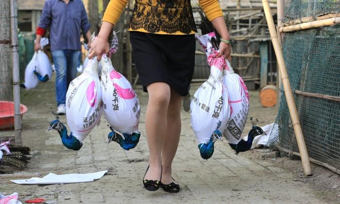 Foto Шэньчжэнь станет первым городом в Китае, где запретят есть кошек и собак 4 23.06.2021