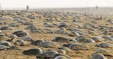 Foto Пока все на карантине: на пляже в Индии черепахи отложили более 60 миллионов яиц 3 24.07.2021