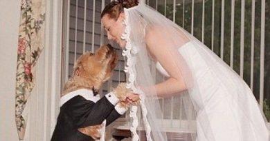 Вдова вышла замуж за собаку своего мужа 3 17.04.2021
