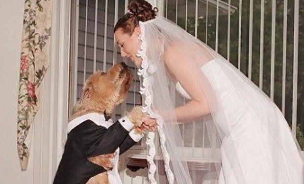 Foto Вдова вышла замуж за собаку своего мужа 1 16.06.2021