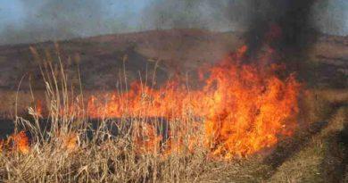 Foto /VIDEO/ Incendiu de vegetație în apropiere de orașul Cupcini. Flăcările s-au extins pe sute de metri pătrați 1 23.06.2021