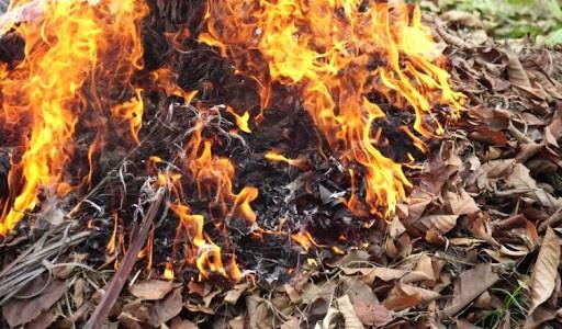 Persoanele care dau foc la resturile vegetale vor fi amendate