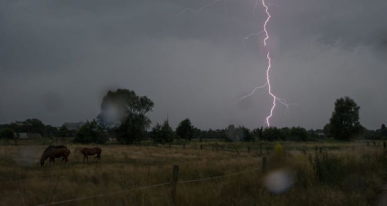 От удара молнии на юге Молдовы скончались 36 коз 1 12.05.2021