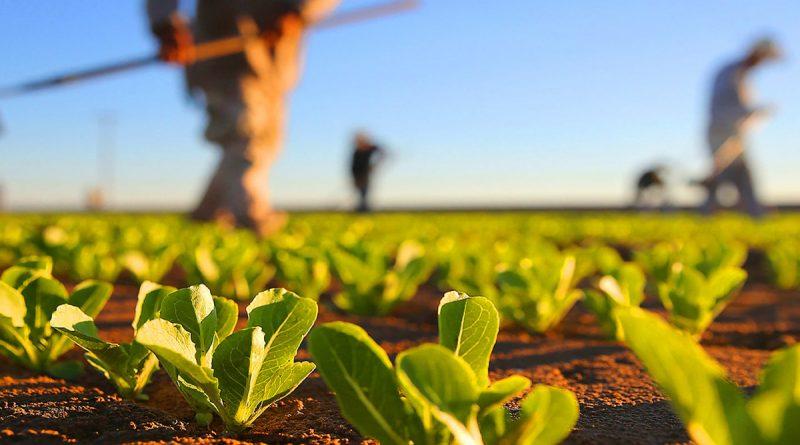 Subvenții în avans pentru proiectele din agricultură