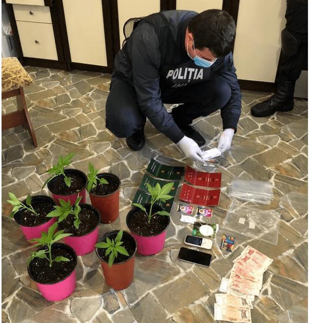 Foto Seră pentru cultivarea cânepii în Hâncești. Cinci bănuiți au fost reținuți 2 16.06.2021