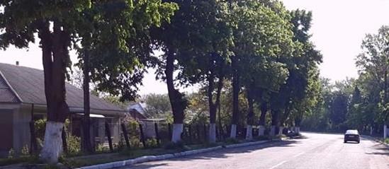 Un bărbat din Fălești a ajuns cu mașina într-un copac după ce a urcat beat la volan