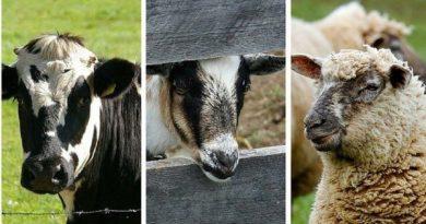 Numărul animalelor domestice scade în Republica Moldova