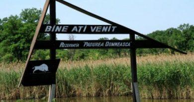 """Pestă porcină africană depistată la zece cadavre de mistreți din Rezervația """"Pădurea Domnească"""""""