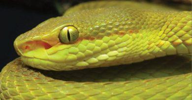 O nouă specie de șarpe denumită în cinstea unui personaj din Harry Potter