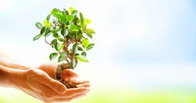 Un program de ecologizare va fi lansat în Republica Moldova