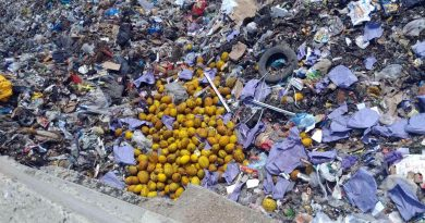 ANSA a lichidat un lot de peste 2700 kilograme de pepene galben