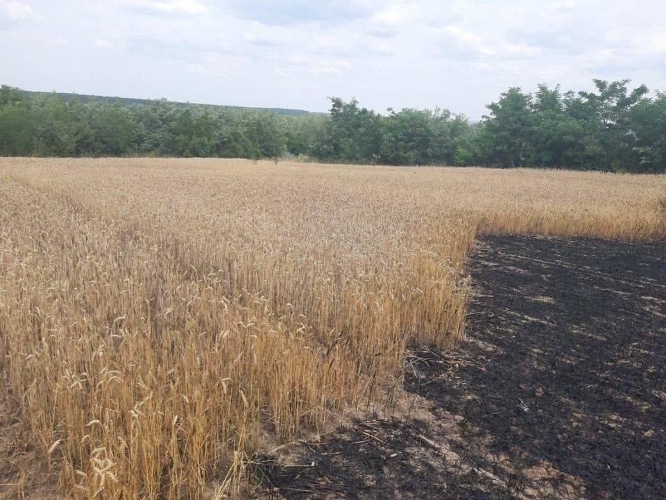 Foto /FOTO/ Șapte hectare de grâu au fost mistuite de flăcări în raionul Dondușeni 1 14.06.2021