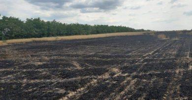 /FOTO/ Șapte hectare de grâu au fost mistuite de flăcări în raionul Dondușeni