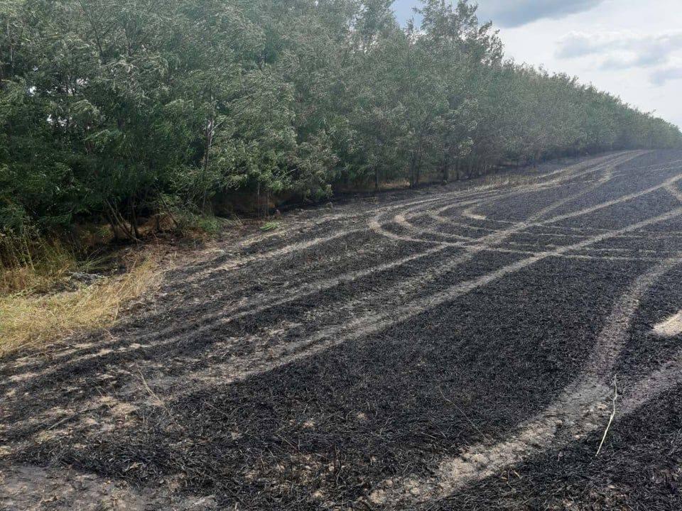 Foto /FOTO/ Șapte hectare de grâu au fost mistuite de flăcări în raionul Dondușeni 3 14.06.2021