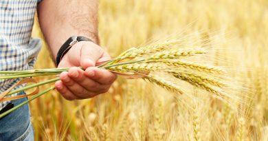 Доступ к компенсациям в сельском хозяйстве будет упрощен 4 18.04.2021