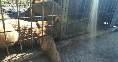В Сочи медведи загрызли мальчика, зашедшего к ним в вольер 3
