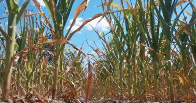 Guvernul va solicita un credit de la Banca Mondială pentru a ajuta agricultorii care s-au confruntat cu pierderi