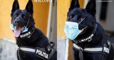 /FOTO/ Un câine arată cum se poartă corect masca de protecție