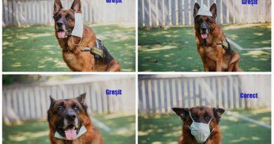 /FOTO/ Un alt câine arată cum se poartă corect masca de protecție 1