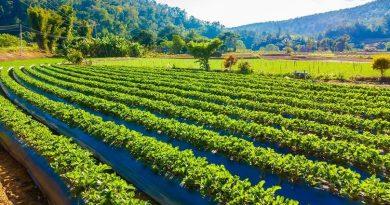 Atlasul Agriculturii Ecologice a fost lansat în Republica Moldova