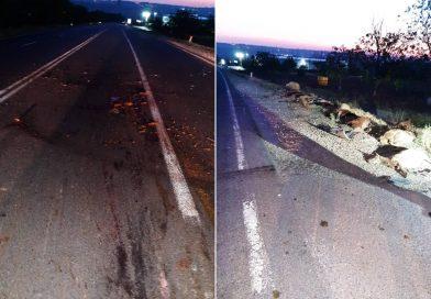 19 oi au murit, iar șase au fost rănite în urma unui accident rutier