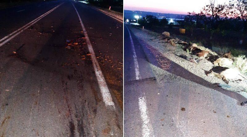 Foto Nouăsprezece oi au murit, iar șase au fost rănite în urma unui accident rutier 1 24.07.2021