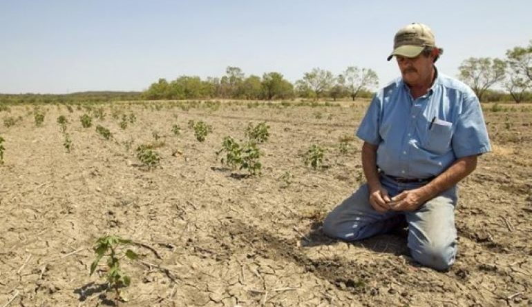 Такой засухи, как нынешняя, в республике не было с 1947 года 1