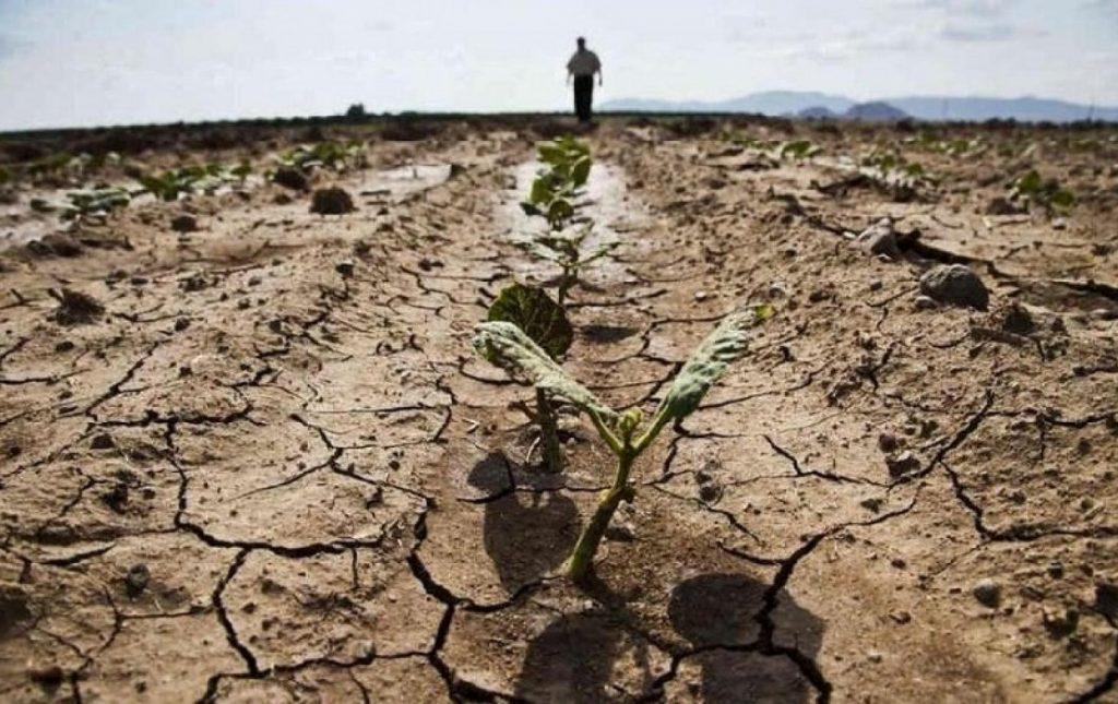 Такой засухи, как нынешняя, в республике не было с 1947 года 2