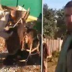 /VIDEO/ Imagini revoltătoare. Un bărbat din raionul Râșcani a fost filmat în timp ce își bate propriul cal care zace la pământ