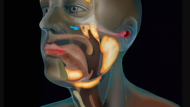 Oamenii de știință au descoperit întâmplător un nou organ în corpul uman