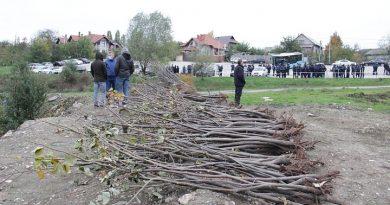 Foto В Кишиневе посадили более 10 тысяч деревьев 7 24.07.2021