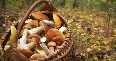 În raionul Edineț au fost înregistrate șase cazuri de intoxicații cu ciuperci în trei zile