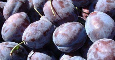Încă un lot de aproximativ 10 tone de prune moldovenești a fost distrus în Federația Rusă