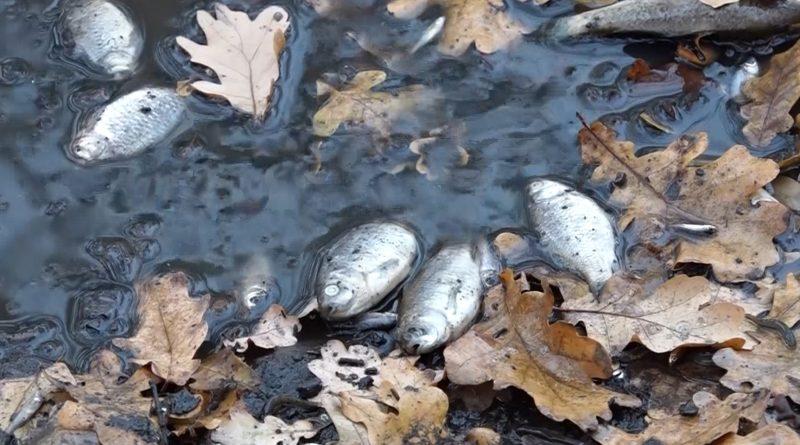 /VIDEO/ Sute de pești morți zac pe malul lacului orășenesc din Edineț