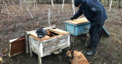 Substanțe narcotice depistate într-un stup de albine din raionul Soroca