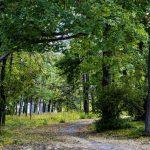 Parcul Țaul din raionul Dondușeni găzduiește aproximativ 150 specii de coniferi