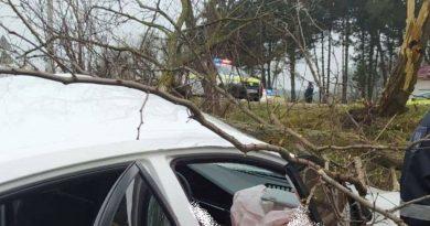 /FOTO/ Grav accident în raionul Fălești. Un bărbat a murit după ce s-a lovit cu mașina într-un copac de pe marginea drumului