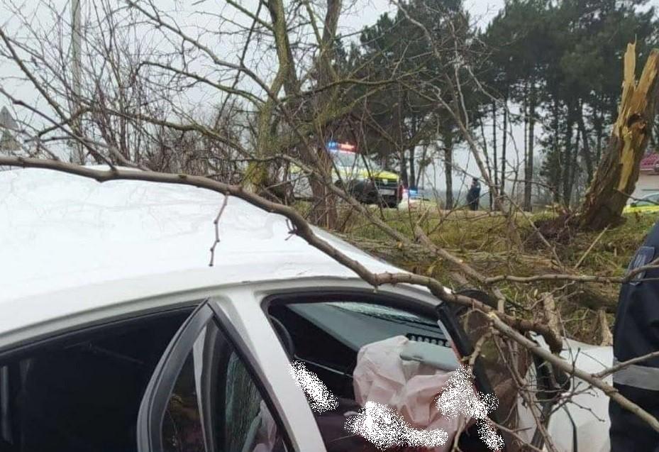 Foto /FOTO/ Grav accident în raionul Fălești. Un bărbat a murit după ce s-a lovit cu mașina într-un copac de pe marginea drumului 1 14.06.2021