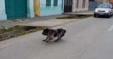 O tânără din raionul Drochia a ajuns la spital, după ce a tamponat cu mașina un câine, după care s-a lovit cu unitatea de transport într-un copac